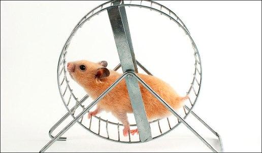 6359644500328600321787960773_Hamster-wheel